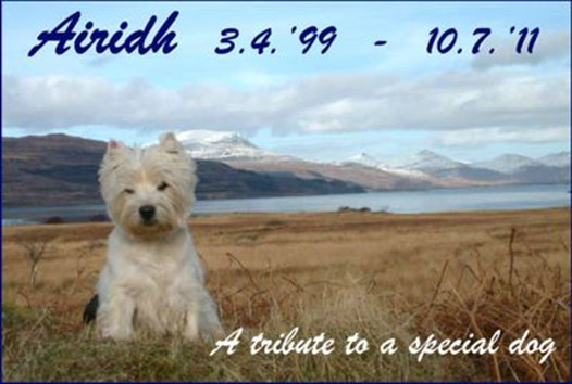 Home - UK Westie ReHoming