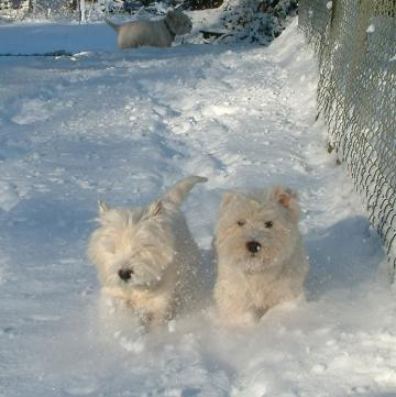 Helping Your Dog In Cold Weather