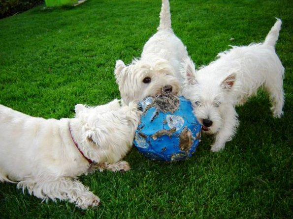 3 Dogs and a ball