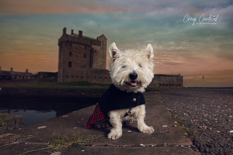 TIMMY – Adopting the senior dog