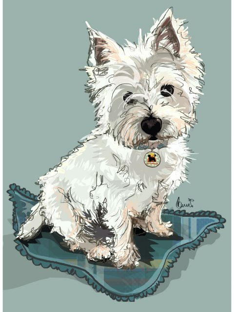 Introducing two of our rehomed westies,  MACDUFF and DAISY