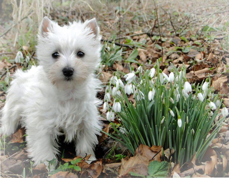 Puppy Playtime (video)