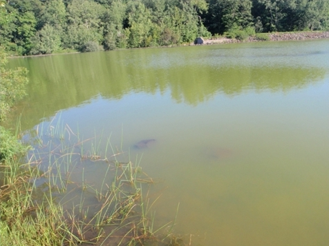 Blue-Green Algae – the dangers to your dog