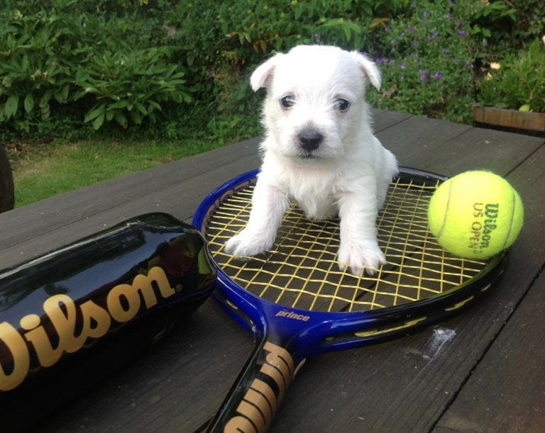 Anyone for Tennis??