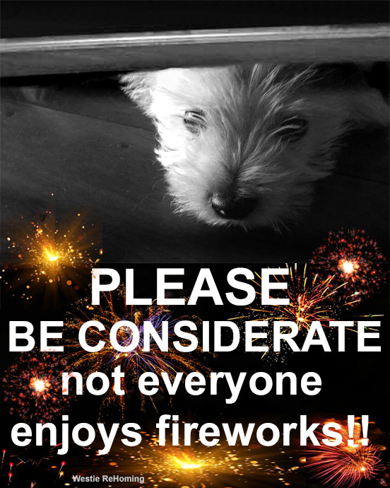 To Help Your Dog in the Firework Season