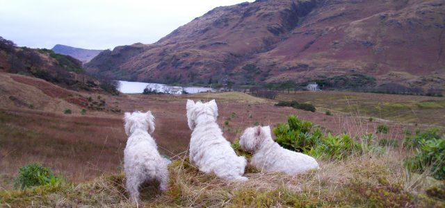 Website Loch Uisg Edit